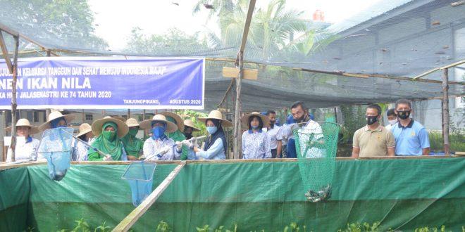 Foto panen Ikan Nila di Areal Mako Lantamal IV